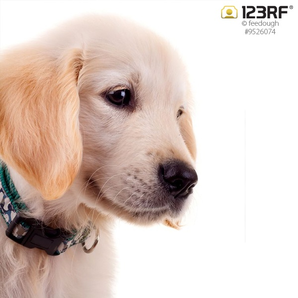 A dog is the only thing on earth that loves you more than he loves himself. ~ Josh Billings #123rf #dogs #pets