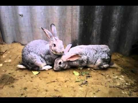 Кролики  Яма для кроликов 20