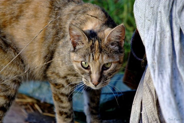 Australia Builds World's Largest CatProof Fence to