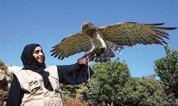 جواهر الشامسي Animals Bird Owl