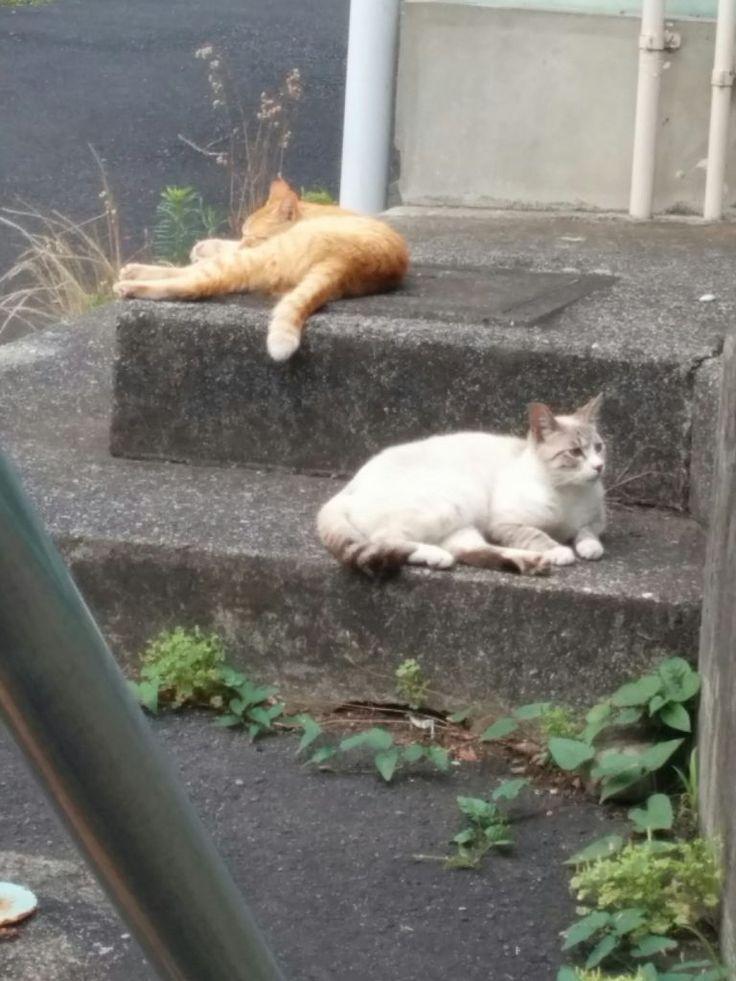 家猫のノミ駆除をしていないのは約七割だって | 猫用レボリューションでフィラリア予防ノミ・ダニの駆除