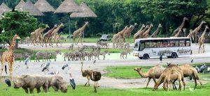 Игровой автомат «PhotoSafari» поразит Вас своими уникальными и яркими персонажами, прекрасным интерфейсом, а также незабываемой атмосферой. Вы – фотограф, задача которого заключается в запечатлении на камеру диких животных. Это могут быть зебры, львы, жирафы или даж