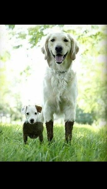 17 Best Images About Muddy Dogs On Pinterest All About