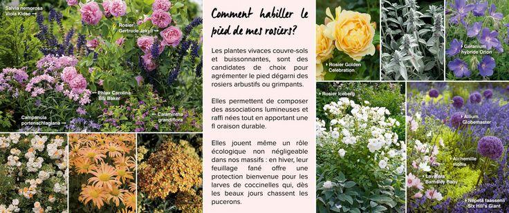 Les 32 meilleures images propos de mixed border sur for Jardin anglais mixed border