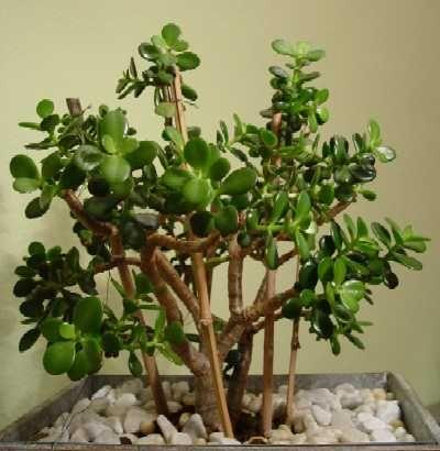 128 besten pflanzen bilder auf pinterest pflanzen g rtnern und blumen pflanzen. Black Bedroom Furniture Sets. Home Design Ideas