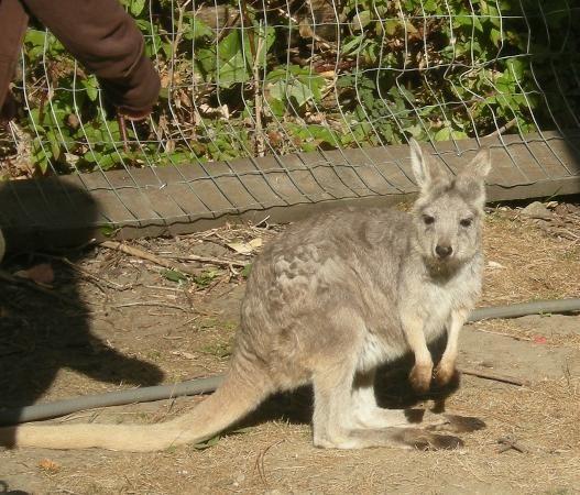Photo of Kangaroo Creek Farm