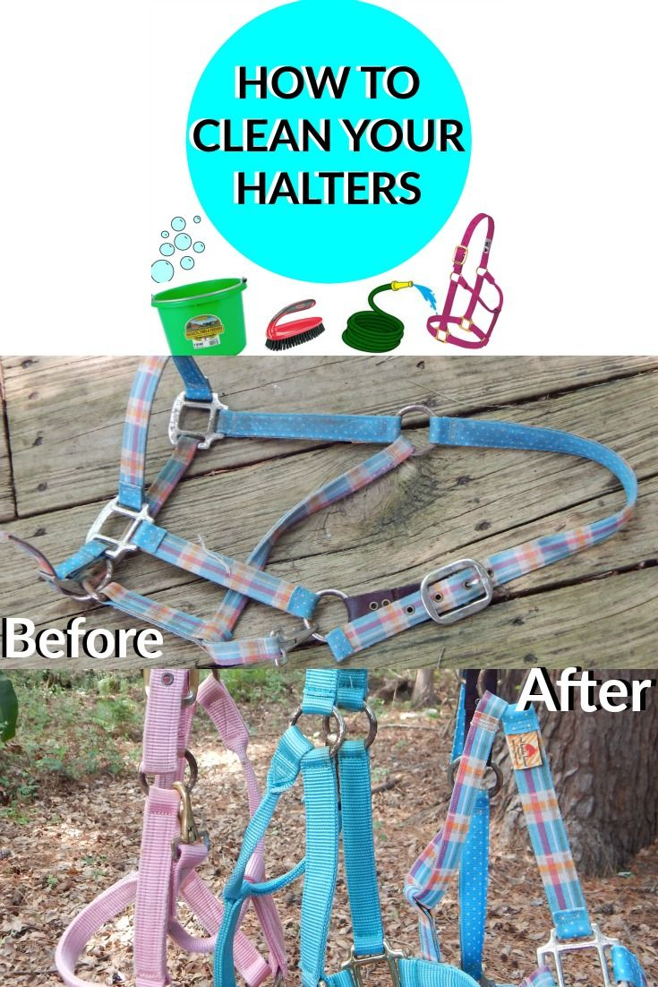 A quick and easy way to clean your horses halters  #horses #tack #cleaning…