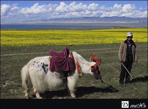 ♥ China  Qinghai Lake | Places I Want To Visit Again