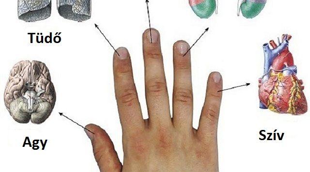 Minden ujjunk két szervünkkel van szoros kapcsolatban! Ismerd meg a japán öngyógyító módszert! - Filantropikum.com