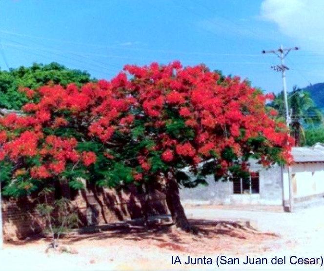 La Junta (San Juan del Cesar)