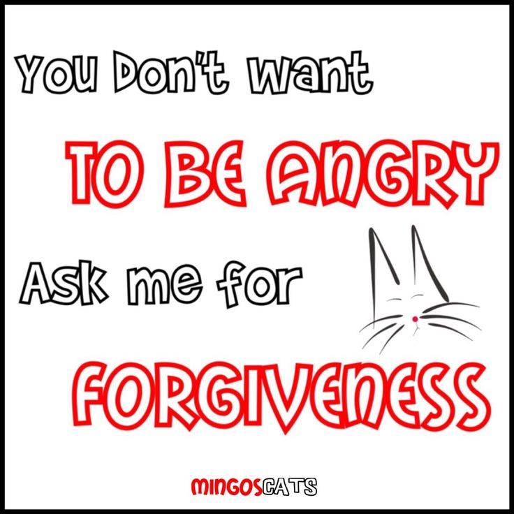 Don´t Angry   #cats #gatos #gatetes #catslovers #catlover #love #amor #meow #miau #angry #forgiveness #perdon