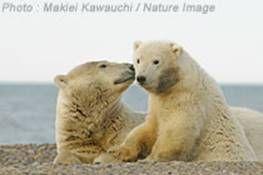 DSC_7774_210_Makiei_alaska