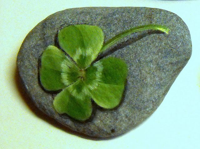 4 leaf clover - painted rock!
