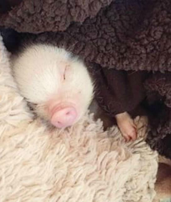 437 Best This Little Piggy Images On Pinterest