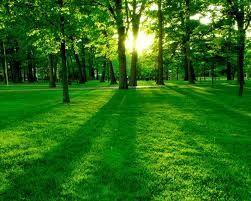 Verde e sostenibilità