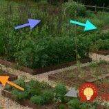 Najdôležitejšie pravidlo pre pestovanie plodín v záhrade: Dodržte to a nemusíte utrácať za hnojivá a postreky, príroda vám pomôže sama!