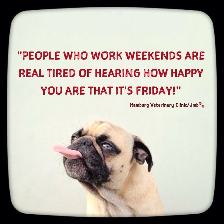 Friday Humor| Animal Funny | Friday is here | Friday funny | Weekend funny | Cute Dog | Working on the Weekend | Bummer | Need a day off | Working hard | Weekend humor:   A little Friday humor for all those who have to work on weekends. I too, feel your pain!!