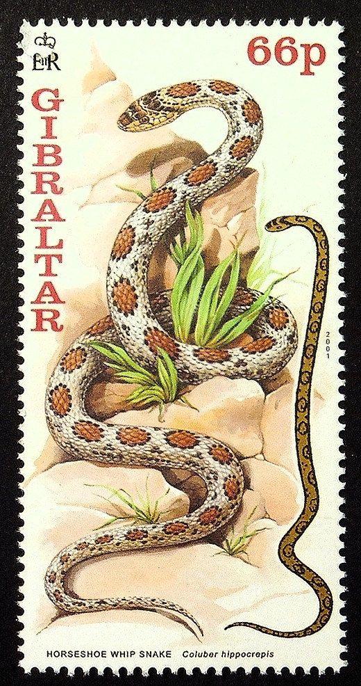 Horseshoe whip snake -Coluber hippocrepis -Handmade Framed Postage Stamp Art…