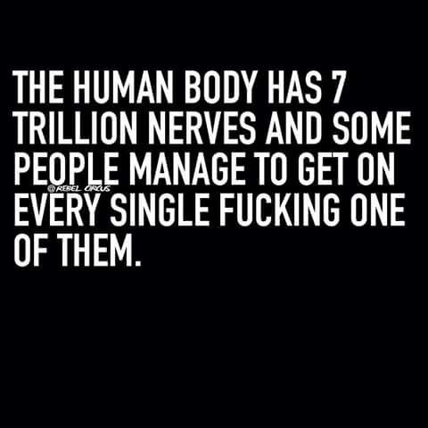 The human body has 7 trillon nerves. ..xx