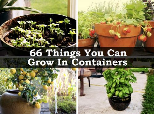 66 Things You Can Grow At Home In Containers Without A