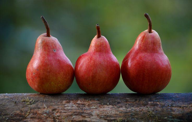 Nach dem Apfel ist die #Birne der wohl am häufigsten angebaute Obstbaum in Deutschland. Gründe für die Beliebtheit der #Birnen gibt es viele: Birnen sehen attraktiv aus, #Birnenbäume liefern mit der Z…