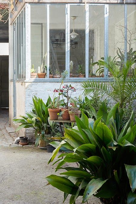 In the summer the indoor plants go outside Méchant Studio Blog: The Green House of Bart and Pieter