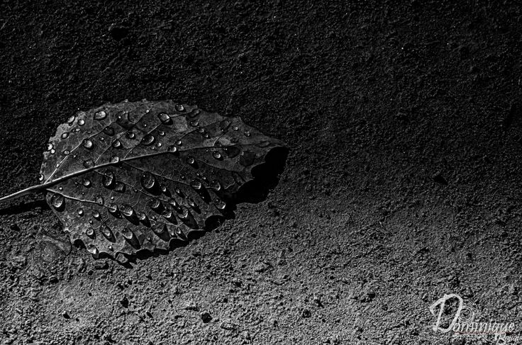 Une feuille morte by Dominique Bougie on 500px