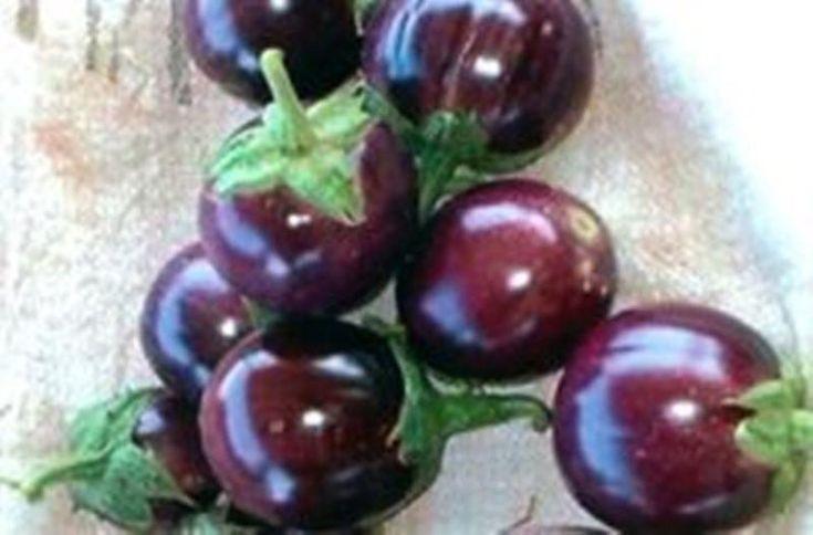 "Thai Baby Eggplant Seeds ""Round Purple"" A.K.A. Thai Eggplant."