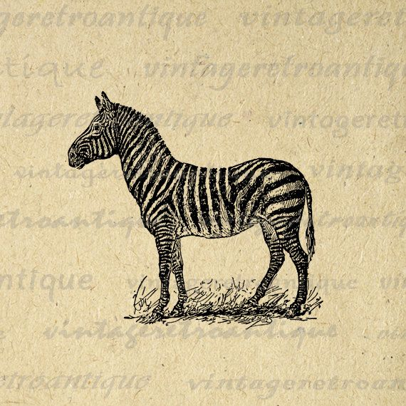 Digital Zebra Image Printable Illustration Download Graphic Vintage Clip Art. Printable high resolution digital image illustration. This vintage high quality digital graphic can be used for printing, transfers, papercrafts, tea towels, tote bags, and much more. Real antique artwork. Antique artwork. This image is high quality at 8½ x 11 inches large. Transparent background PNG version included.