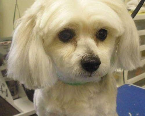 Dog Grooming Coupons Denver