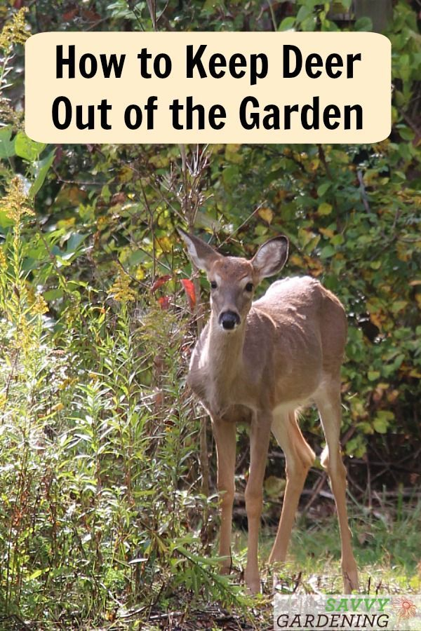 Deer Proof Gardens 4 Sure Fire Ways To Keep Deer Out Of Your