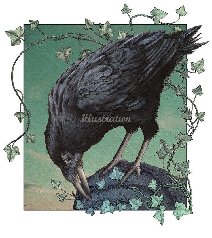 Crow illustration by Alan Baker