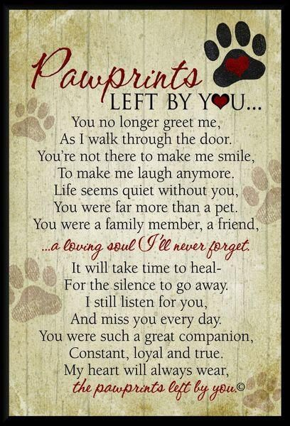 My Sweet Ginger Reneeyou Left Your Paw Prints On Heart And For That I Will ALWAYS BE THANKFUL THERE IS A Hole In Only You Can Fill
