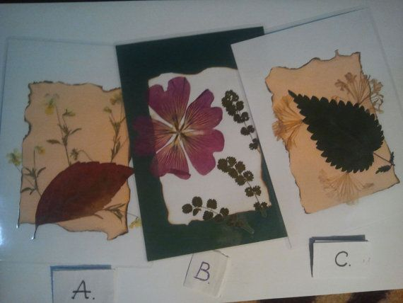 Pressed flowers art  pressed flowers collage  by DraculasGarden