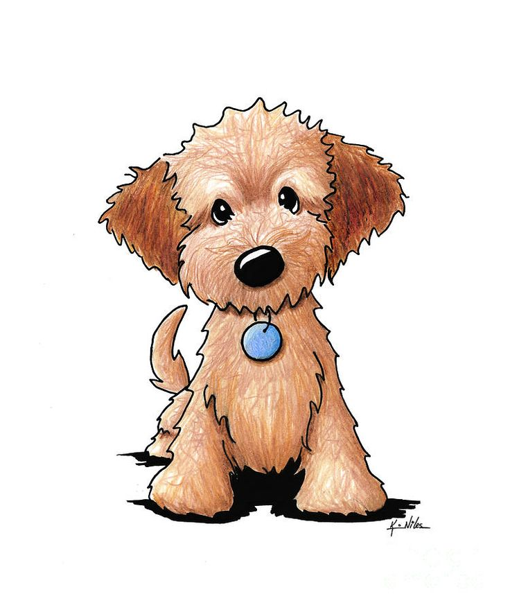 Goldendoodle Puppy Drawing