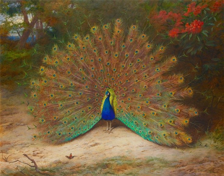 Archibald Thorburn (1860-1935)  —   Peacock and Peacock Butterfly (770x980)