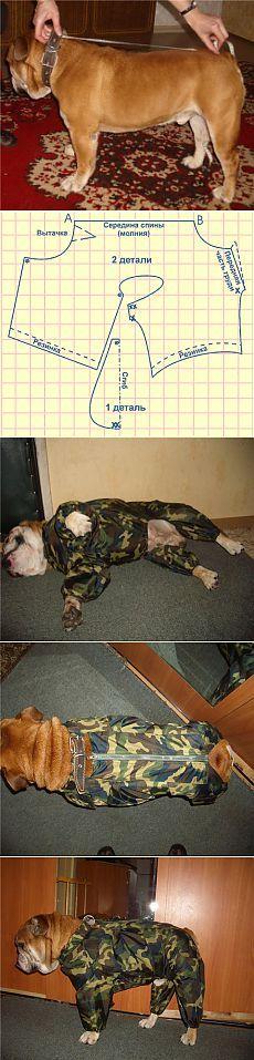 Wie man einen Anzug für den Hund zu nähen.  Pattern-Anzug für Hunde