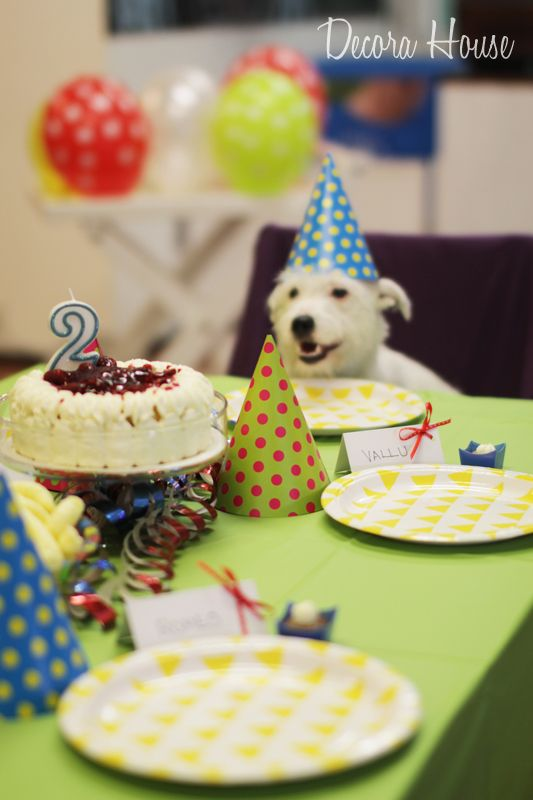 "A Colorful Dog Birthday Party! #dogbirthday ""puppyparty #partyideas#"