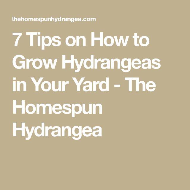 7 Tips on How to Grow Hydrangeas in Your Yard - The Homespun Hydrangea