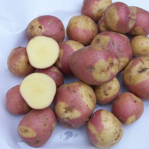 Tartuffli's Erlesene Kartoffeln