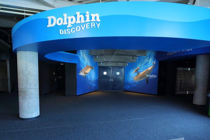 48 Best Aquarium Images On Pinterest Aquarium Aquariums