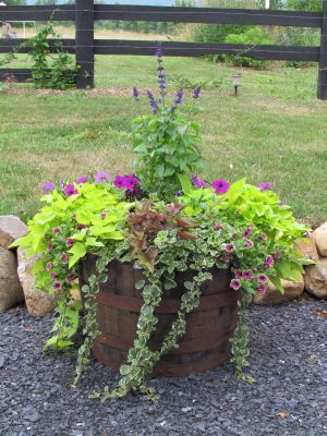 Whiskey barrel planter on the barn patio. @ Khimaira Farm outdoor barn wedding venue Shenandoah Valley Blue Ridge Mountains Luray VA
