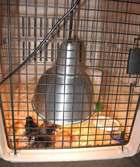 Dog crate chick brooder   (whole article contains loads of useful information)