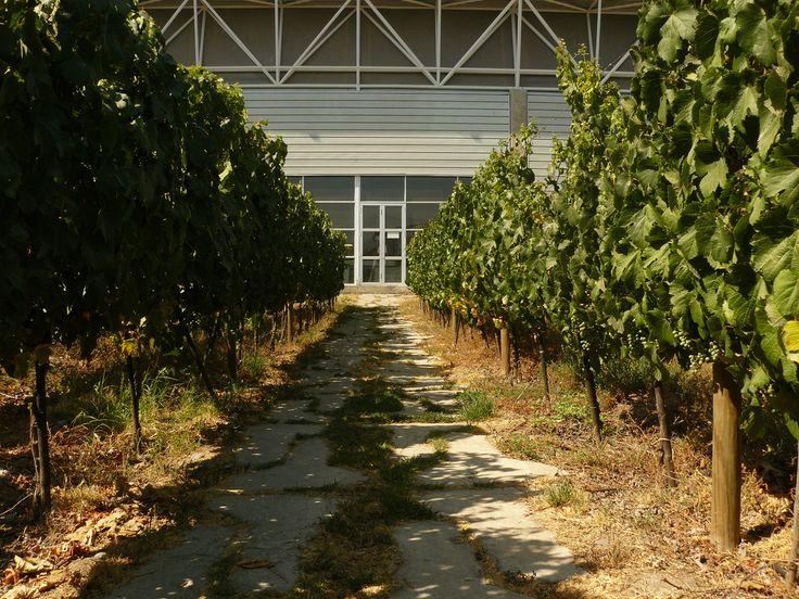 Vista de frontis de Bodega Terra Mater, Isla de Maipo es reconocida como una comuna famosa por sus vinos.