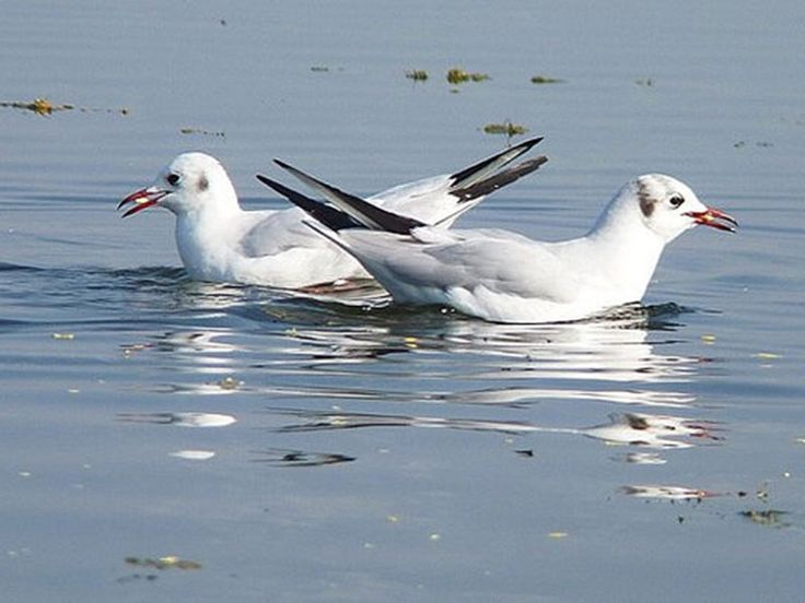 Nal Sarovar Bird Sanctuary - in Gujarat, India
