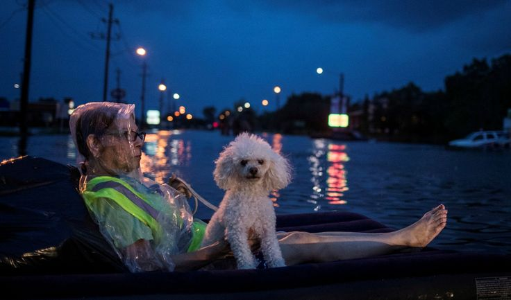 The Dutch have advice on how Houston can plan for future flooding events The impacts of Harvey are raising questions about what cities can do to prepare for flooding events. Dale Morris, who directs the Dutch government's water management efforts in the US, offers some advice.