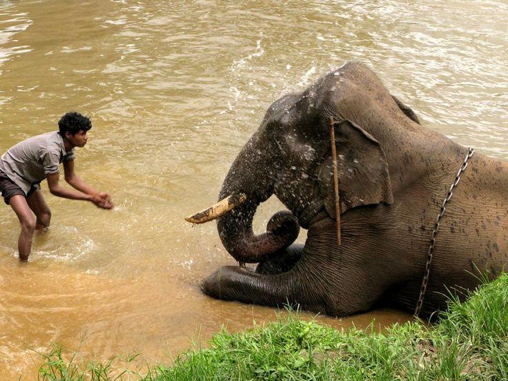 Okay, now I want to visit and elephant training camp. Here's one. How sweet. Dubare Elephant Training camp. Dubare, Coorg, India.