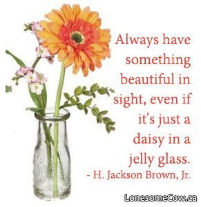 Daisy in a Glass