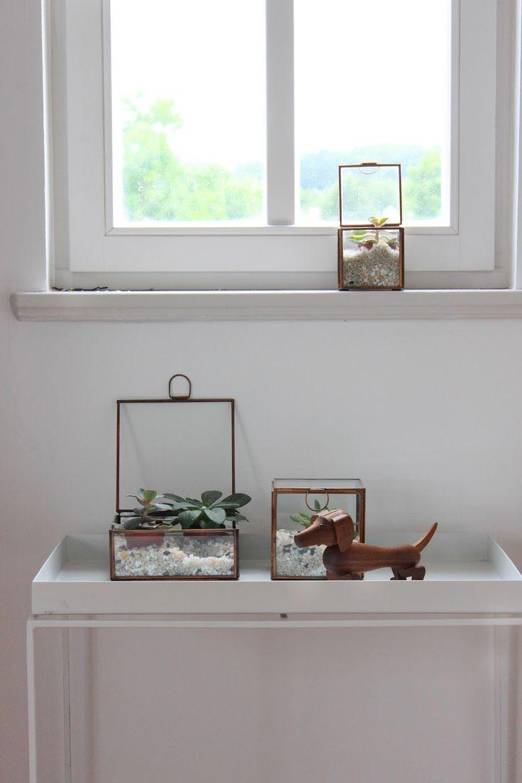 Sukkulenten in Glasboxen dekorieren