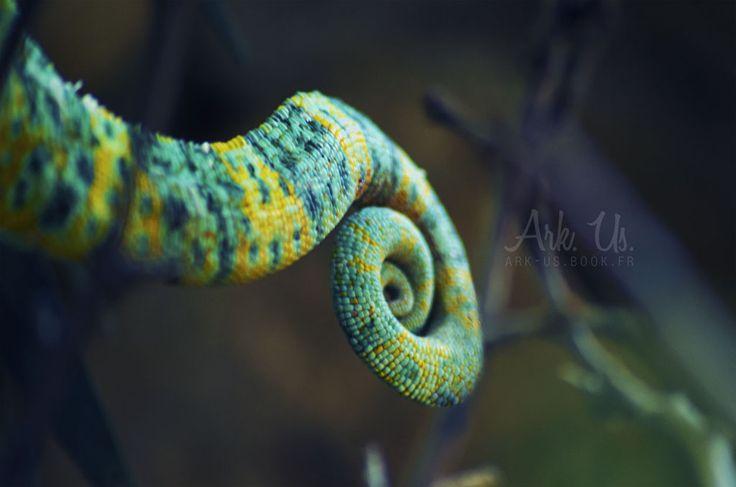 Chameleon tail by Arkus83 on DeviantArt